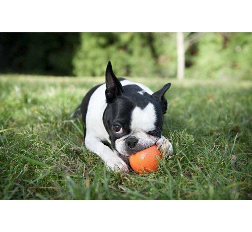West Paw Design Dog Toy JZogoflex ive Orange