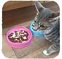 Drinkbak of voerbak Cat Bowl Roze