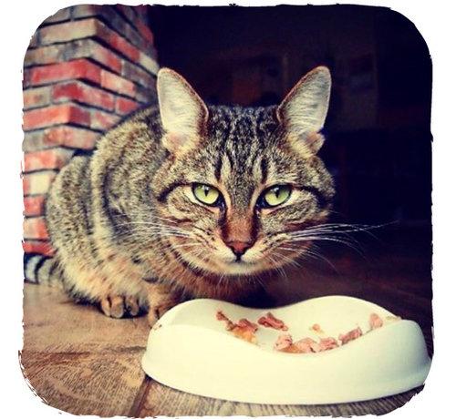 Beco Pets Cat Bowl Natural