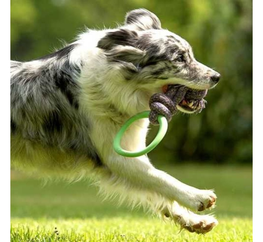 Dog Toy Hoop on a Rope Green