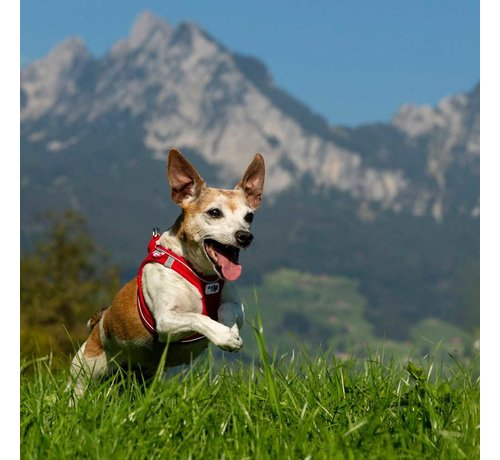 Curli Dog Harness Magnetic Red