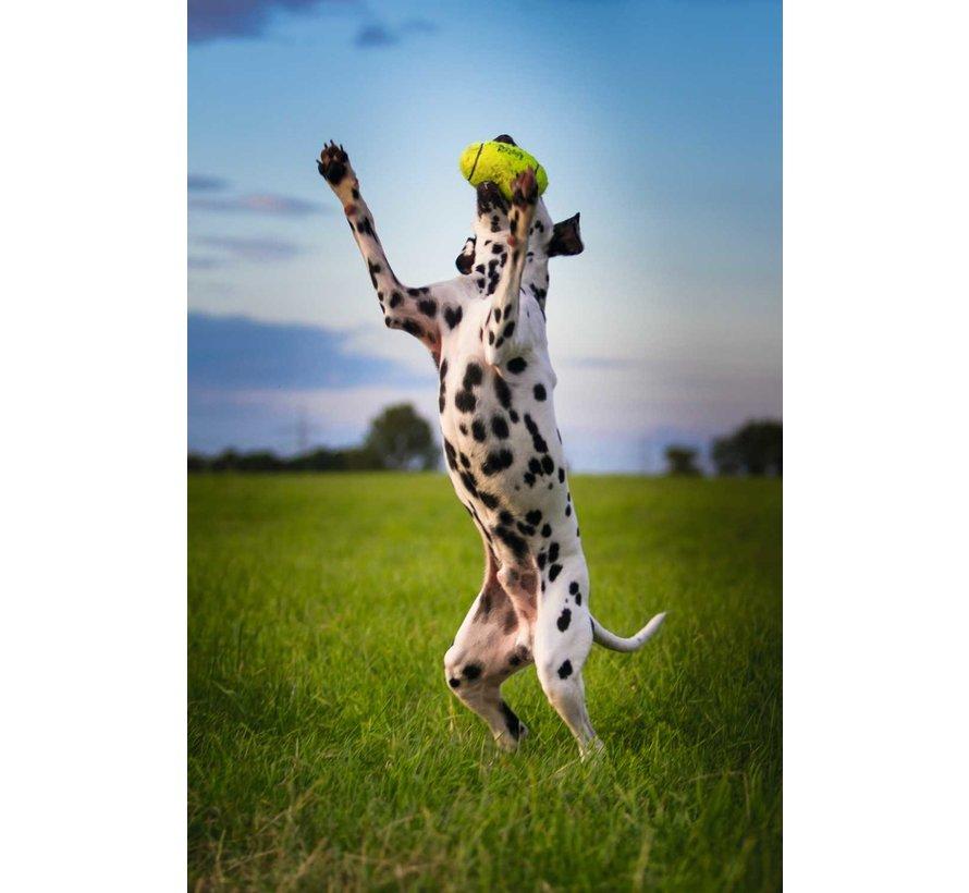 Dog Tooy Squeakair Football