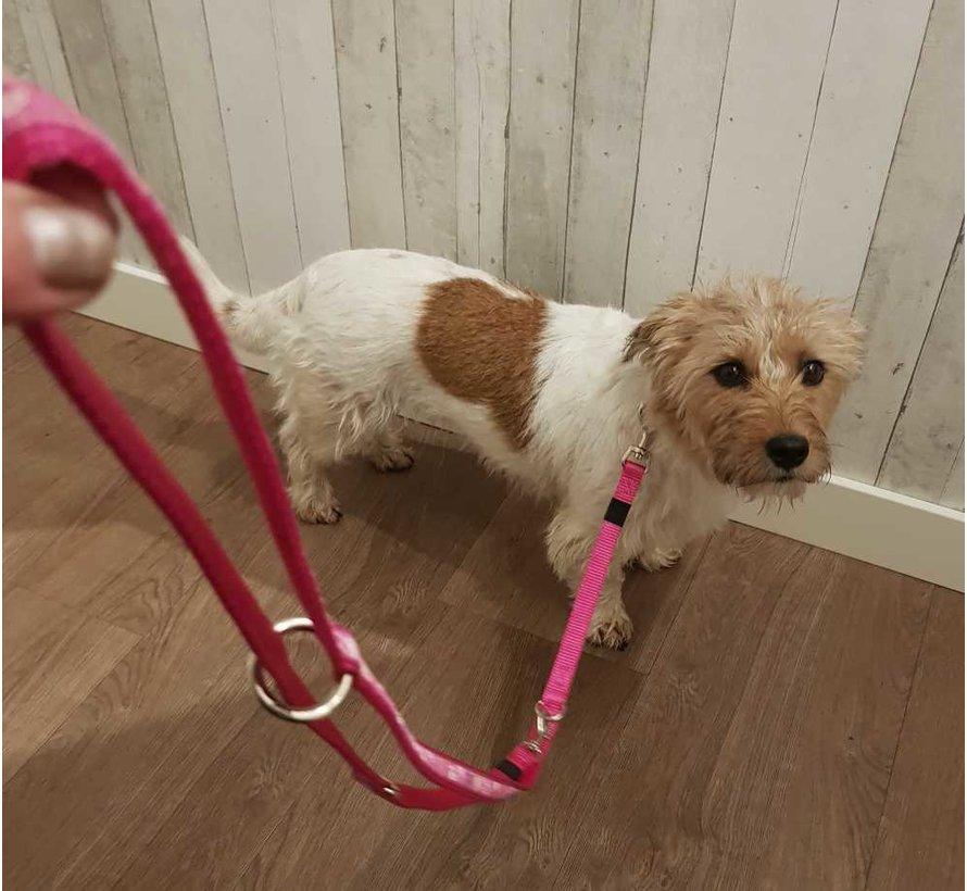 Hondenriem Multi Purpose Pink Paw