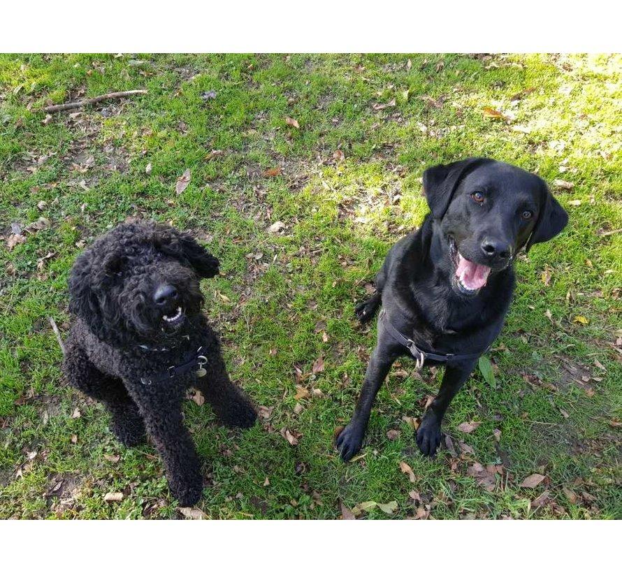 Anti-Pull Dog Harness Easy Walk ® Black