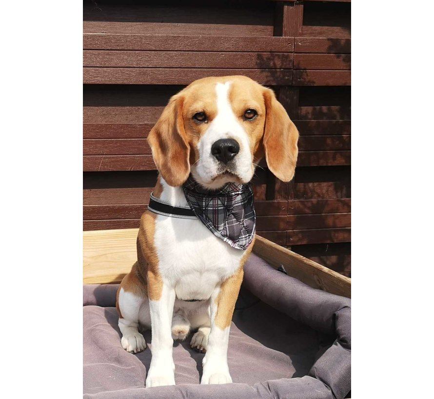 Cooling Pet Bandana Scottish Grey