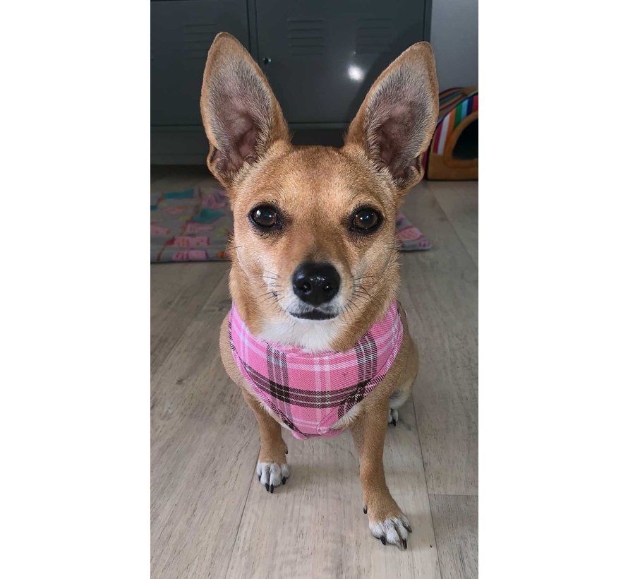 Round Loop Dog Harness Scottish Pink