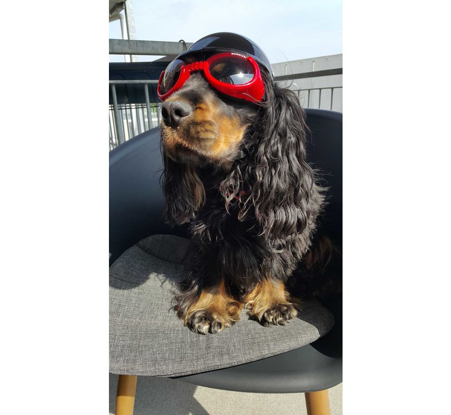 Dog Sunglasses Shiny Red