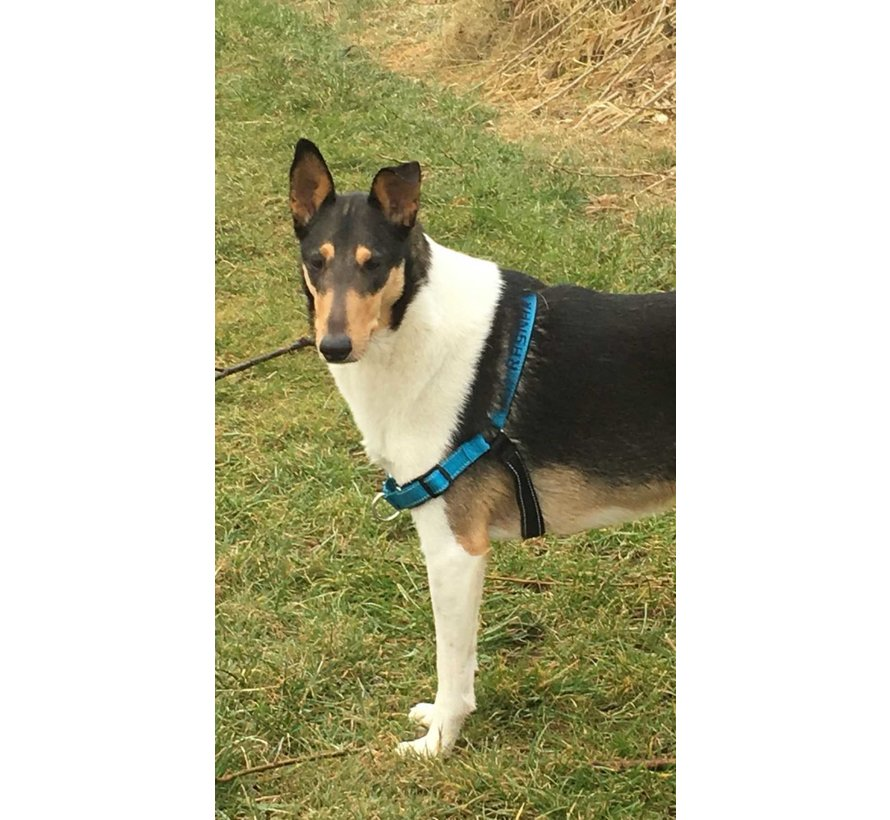 Anti-Pull Dog Harness Easy Walk ® Deluxe