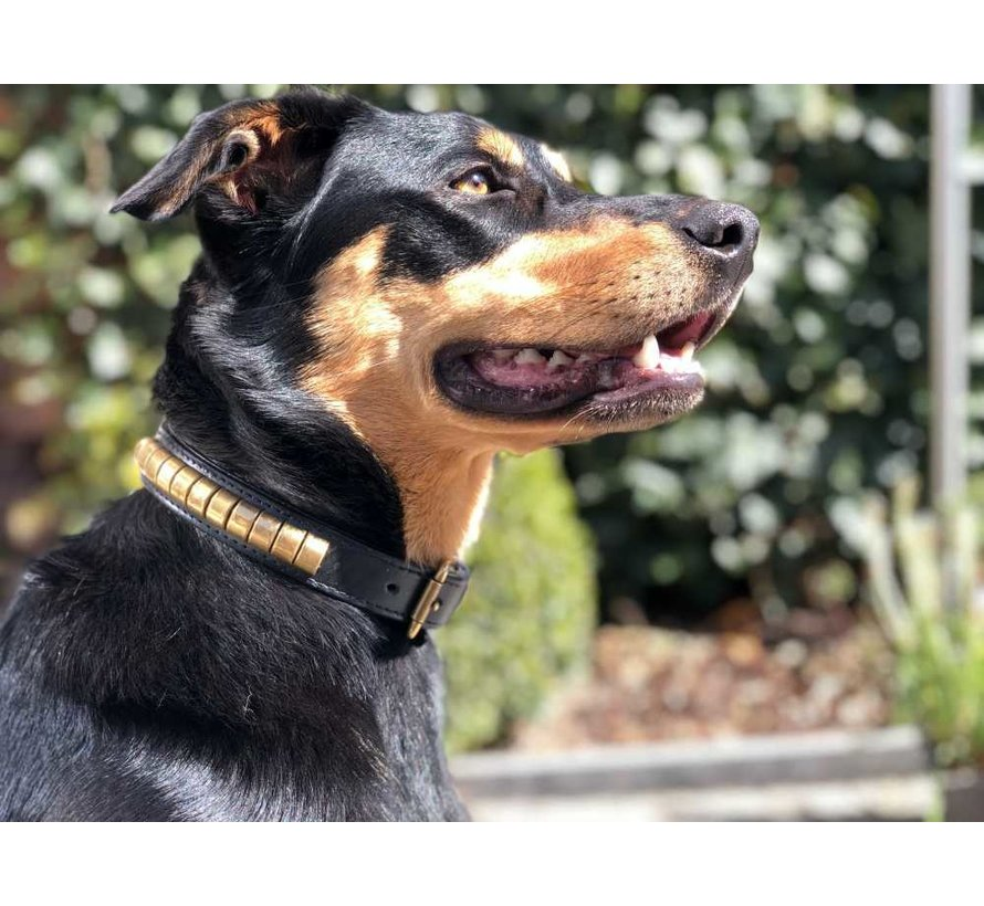 Dog Collar Gold Row black