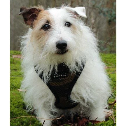 Hondentuig en hondenharnas