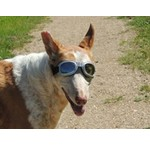 Hondenzonnebrillen