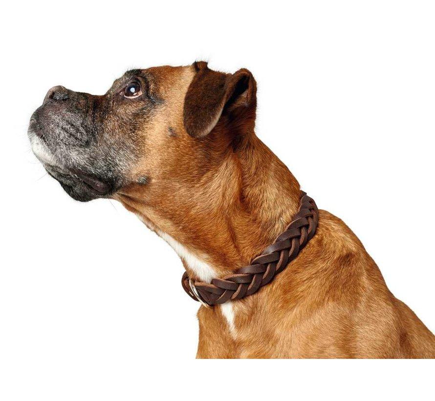 Hondenhalsband Solid Education Bruin