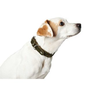 Hunter Dog Collar Solid Education Olive