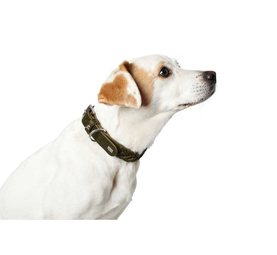 Dog Collar Solid Education Olive