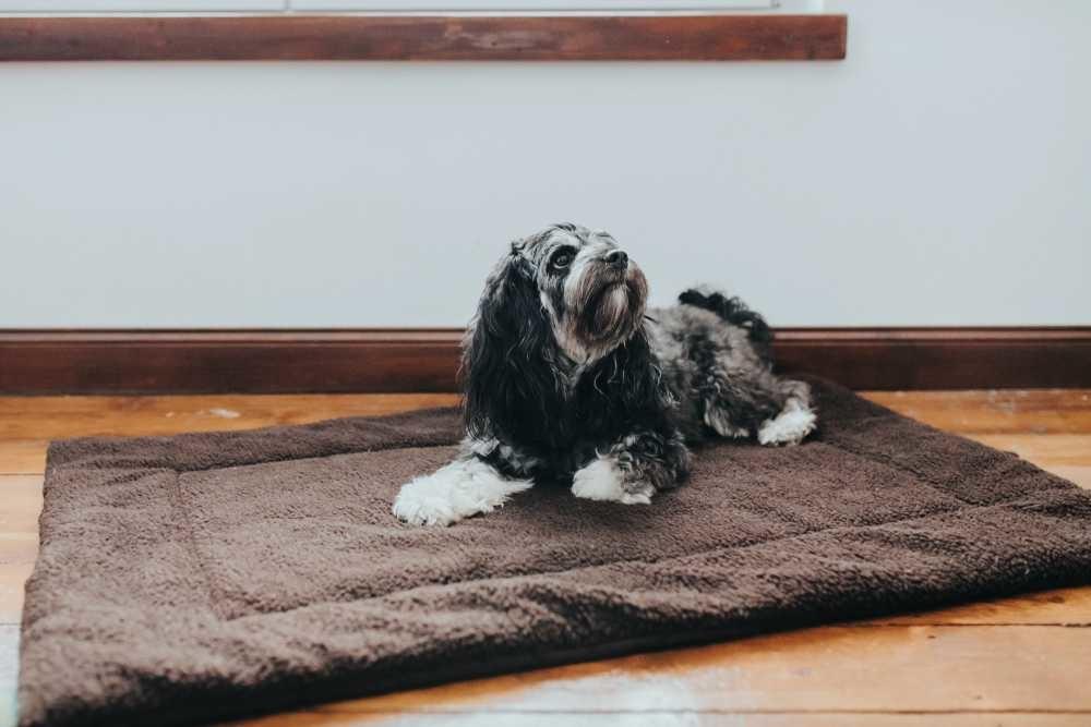 Hondendeken Fluffy Bruin