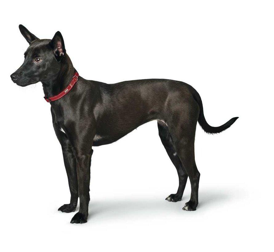 Hondenhalsband Canadian Petit Rood
