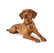 Hunter Sliphalsband Hond Solid Education Cognac