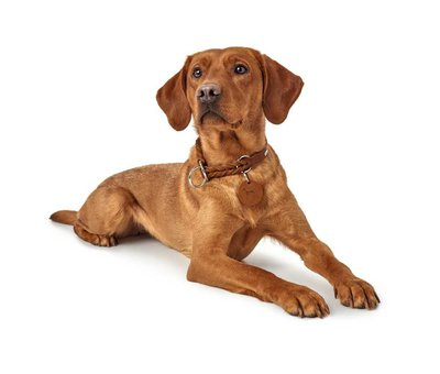 Hunter Training Halsband Hond Solid Education Cognac