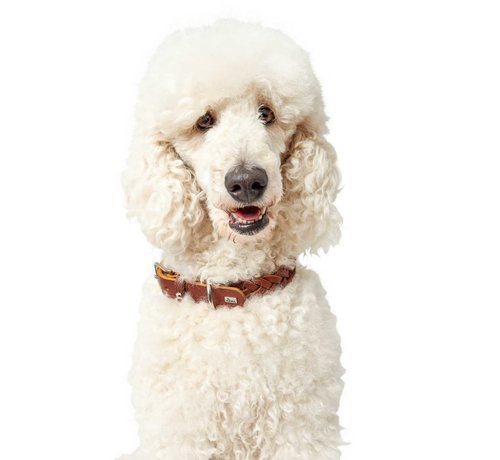 Hunter Dog Collar Solid Education Cognac