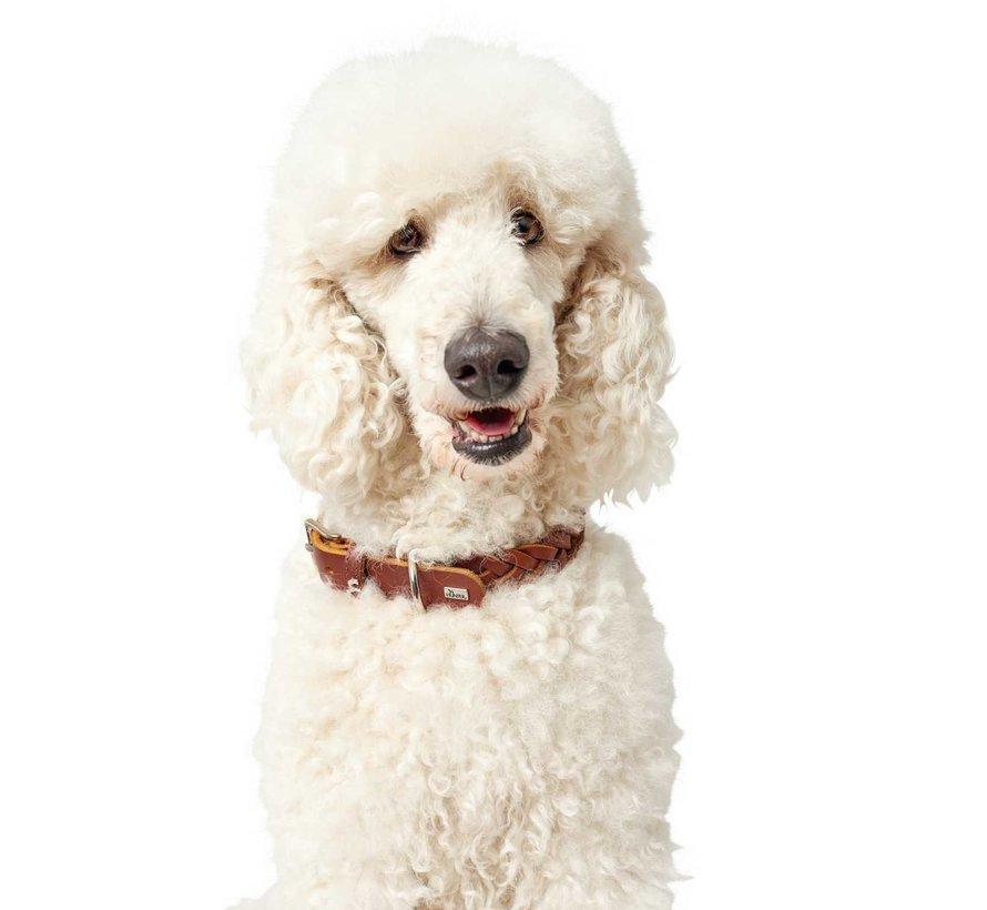 Dog Collar Solid Education Cognac