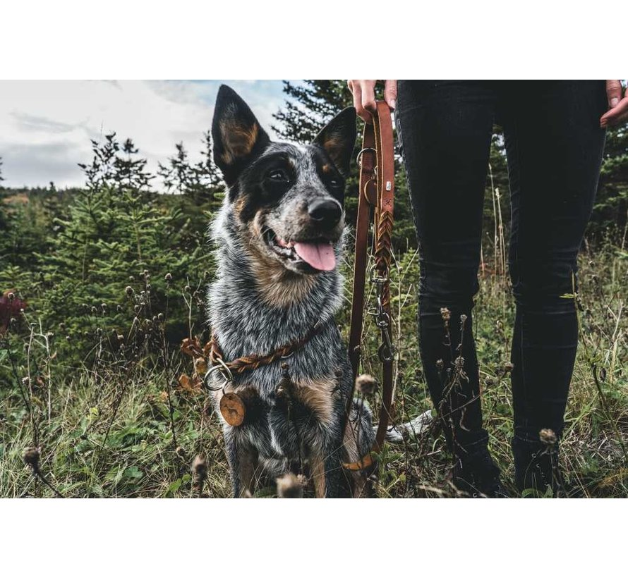 Training Halsband Hond Solid Education Bruin