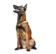 Hunter Sliphalsband Hond Solid Education Olive