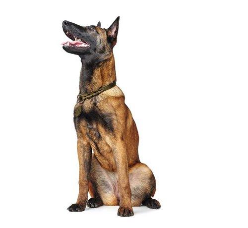 Hunter Training Halsband Hond Solid Education Olive