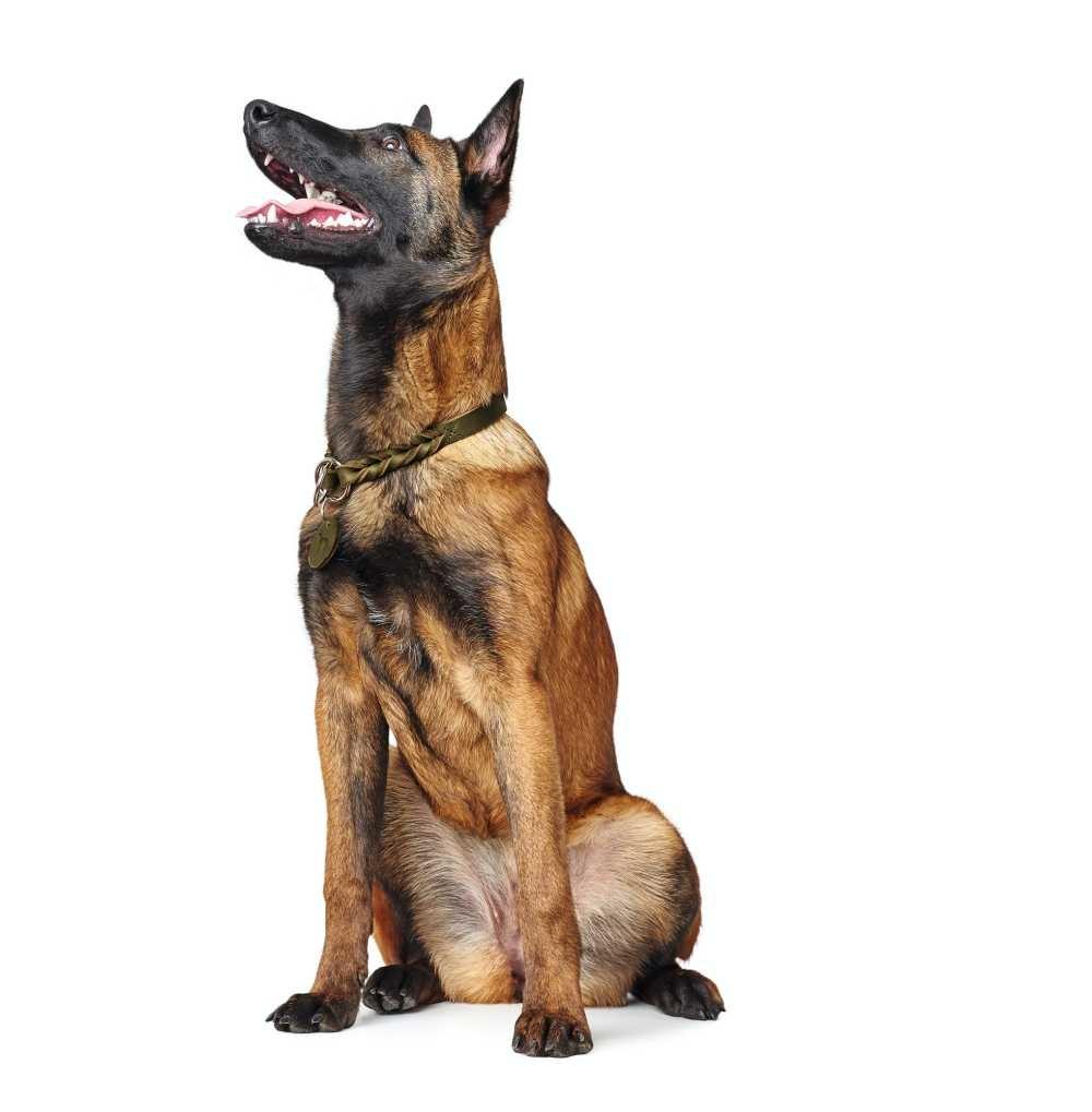 Sliphalsband Hond Solid Education Olive
