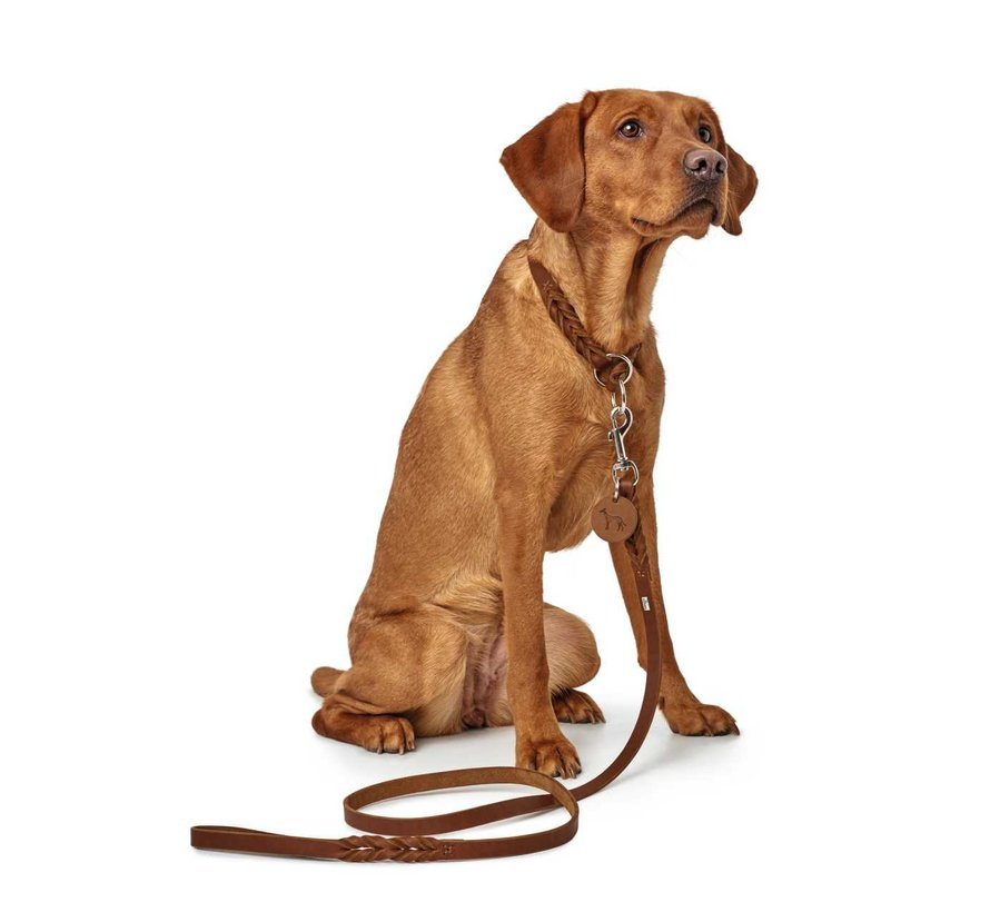 Adjustable Dog Leash Solid Education Cognac