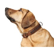Hunter Dog Collar El Paso Cognac