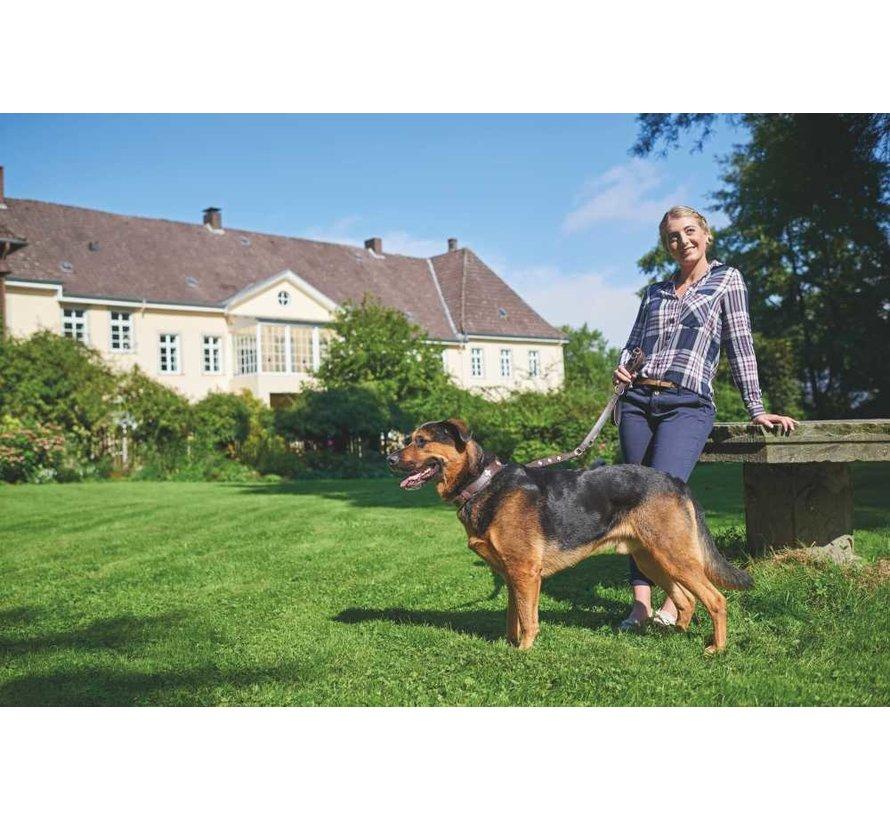 Hondenhalsband Swiss Bruin