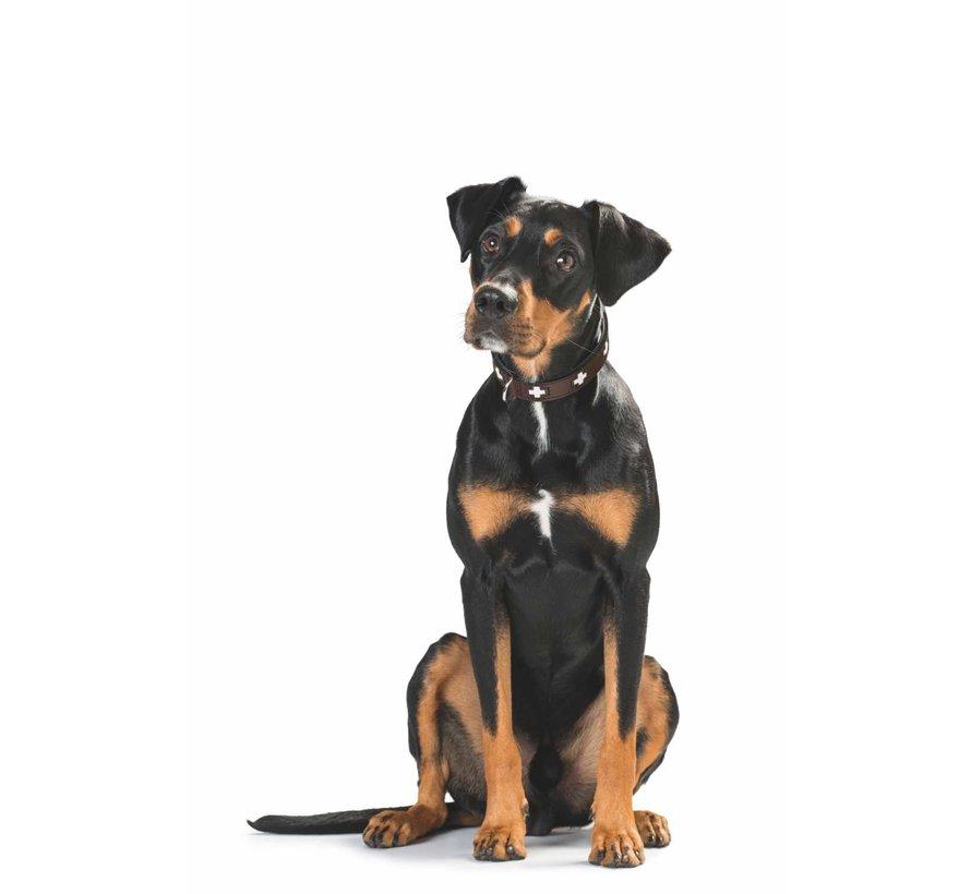 Dog Collar Swiss Brown