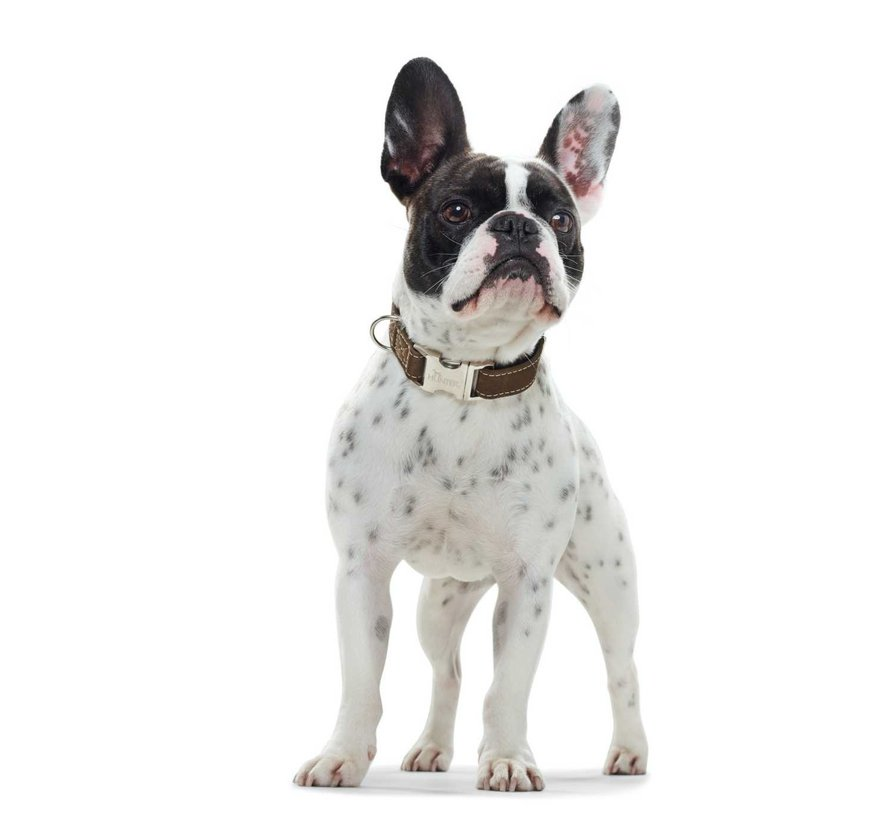 Dog Collar Hunting Alu Strong Green