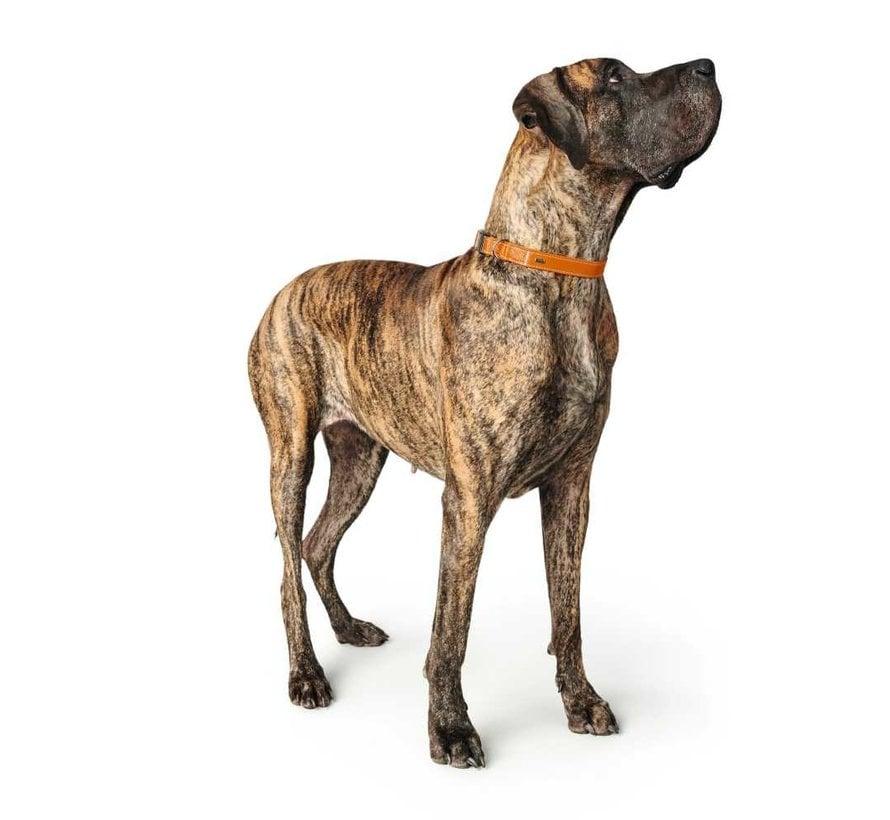 Hondenhalsband Cannes Alu Strong Oranje