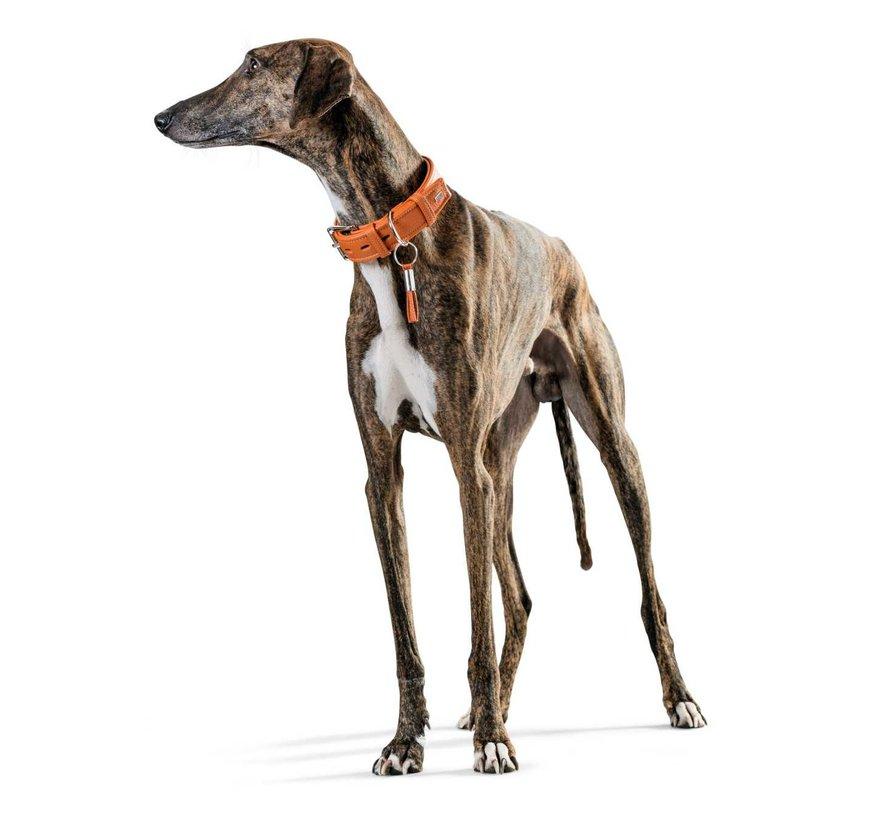 Hondenhalsband Cannes Oranje