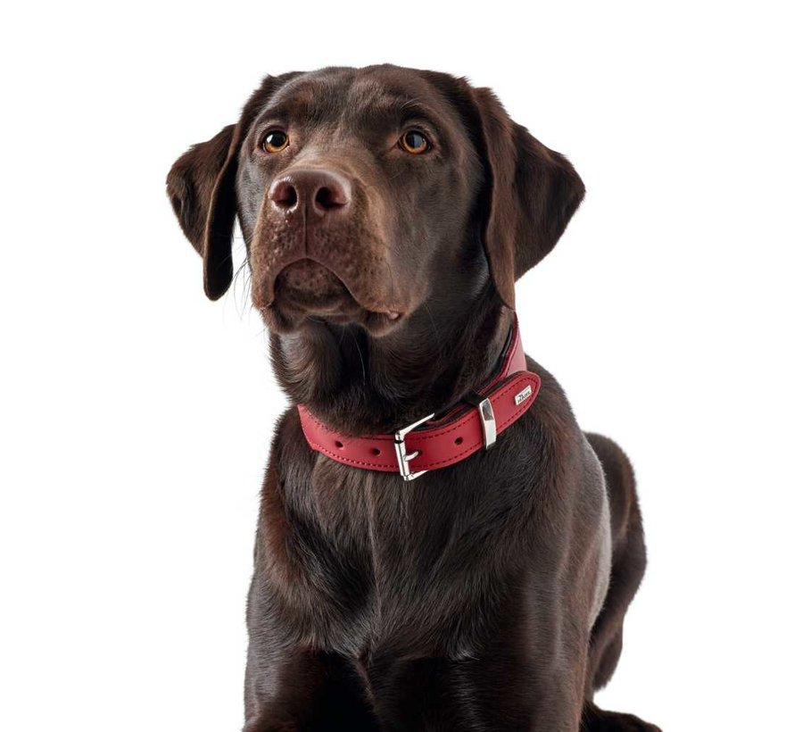 Dog Collar Basic Red