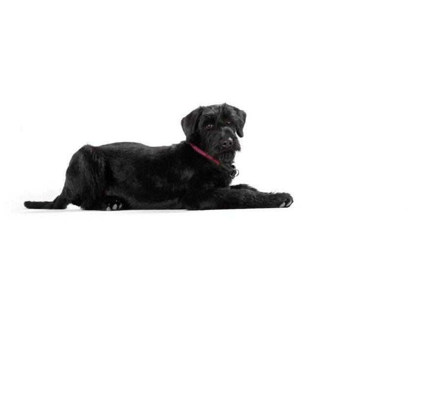Training Halsband Hond Freestyle Raspberry