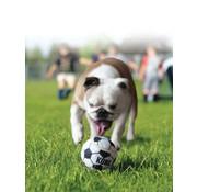 Kong Dog Toy Sport Balls