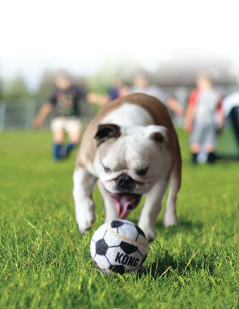 Hondenspeelgoed Sport Balls