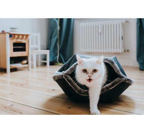Hunter Kattenmand Lugano