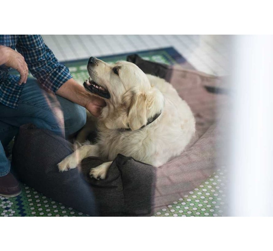 Hondenmand Boston Bruin