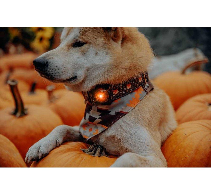 Dog Dual Light Amber