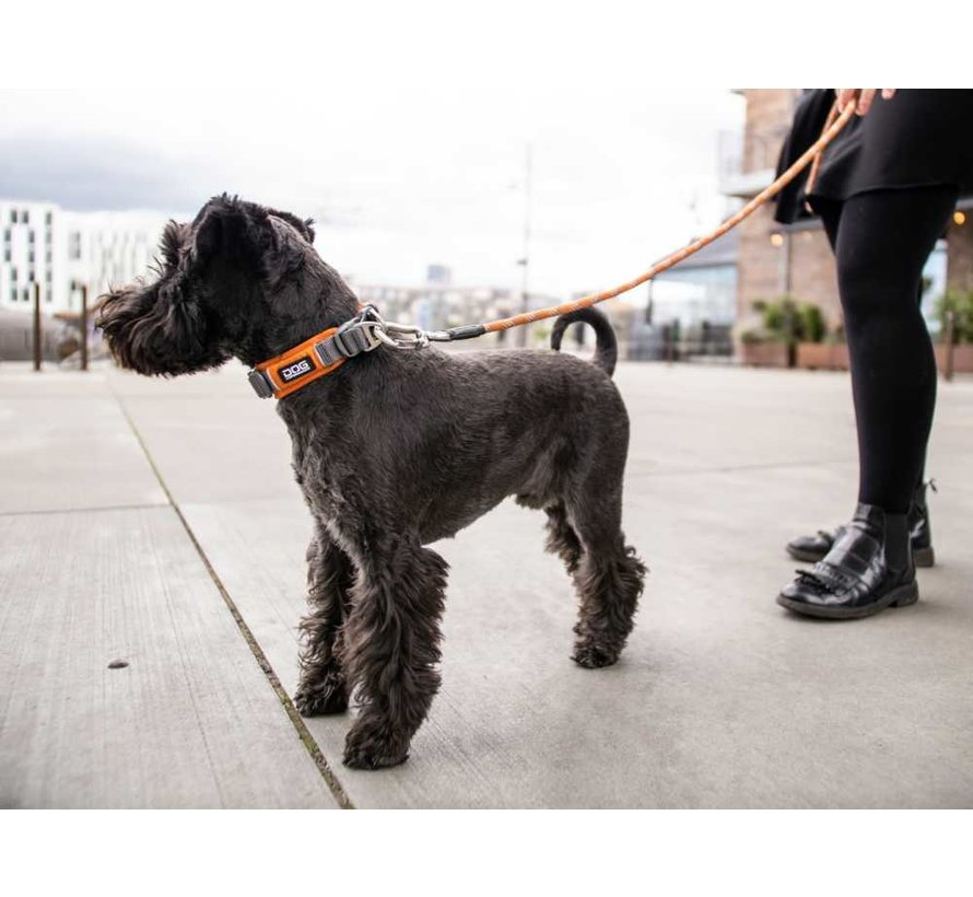 Dog Collar Urban Explorer Orange Sun (V2)