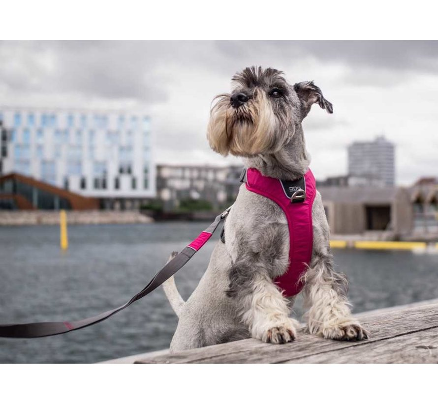 Dog Harness Comfort Walk Pro Wild Rose (V2)