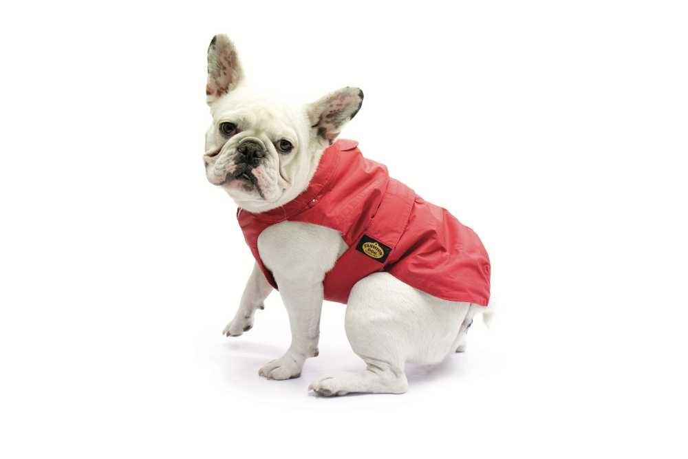 Hondenjas Mopshond & Franse Buldog Rood