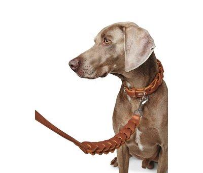 Hunter Dog Collar Solid Education Chain Cognac