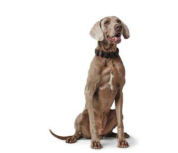 Hunter Dog Collar Solid Education Chain Dark Brown