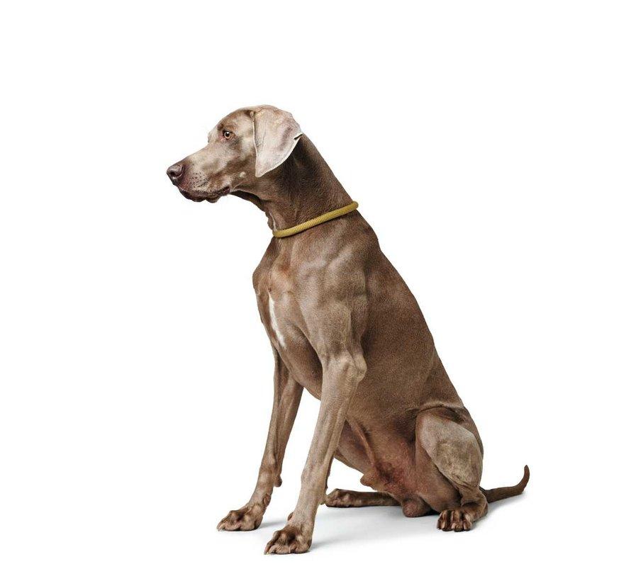 Training Halsband Hond Eiby Freestyle Geel