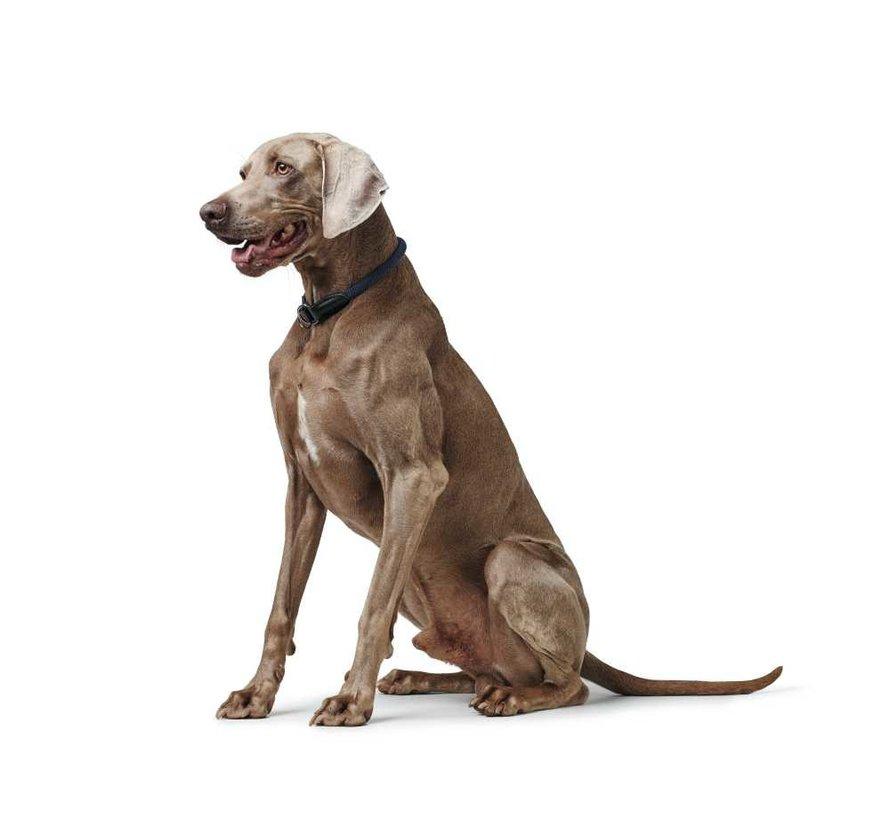 Training Halsband Hond Eiby Freestyle Blauw