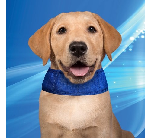 Aqua Coolkeeper Cooling Collar Pacific Blue